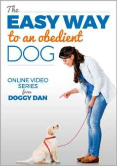 The Easy Way To An Obedient Dog.  Online dog training videos