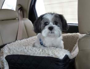 Rufus our Shih Tzu