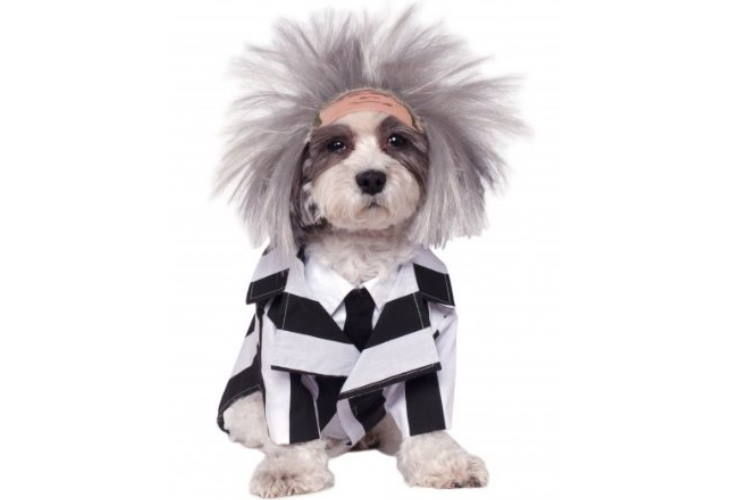 Spooky dog Halloween costumes