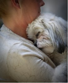 White Shih Tzu being cradled by a woman