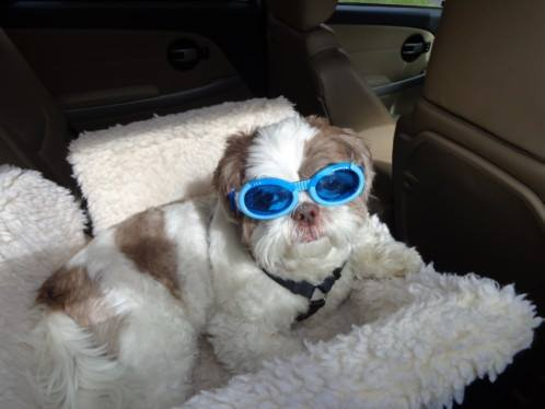 Max wearing his safety doggles