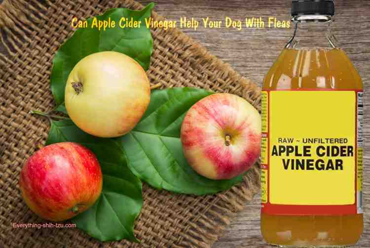 Does Apple Cider Vinegar Keep Fleas Off Dogs