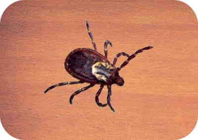 8 rastreador de aparência aranha
