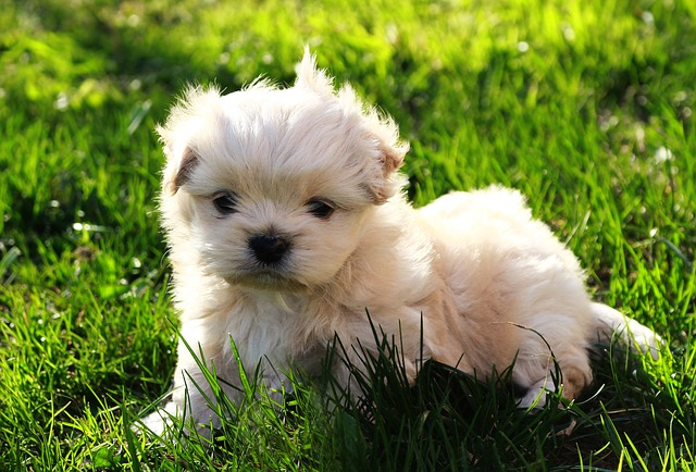 Tiny puppy laying in the grass