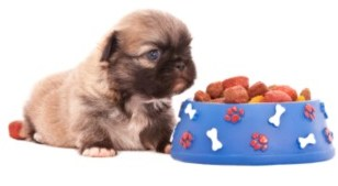small shih tzu with bowl of dog food