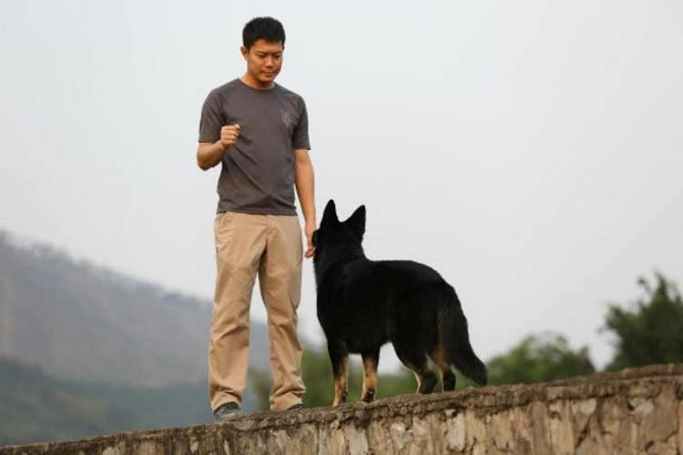 A man teaching his dog how to follow hand signals