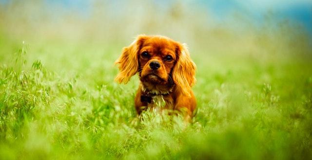 Pretty dog in a field