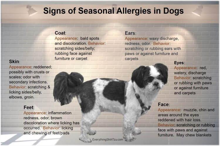 #Seasonal allergies in dogs chart