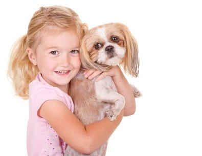 Little girl smiling while holding a Shih Tzu dog